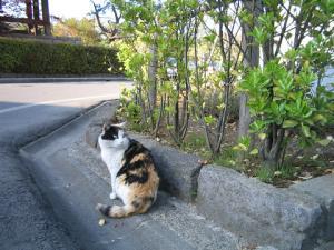 善光寺の三毛猫ちゃん