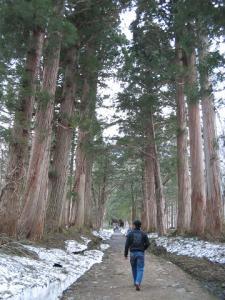 杉並木(奥社入り口~隋神門)