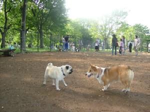 2006.5dogrun3.jpg