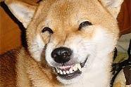 笑う犬www