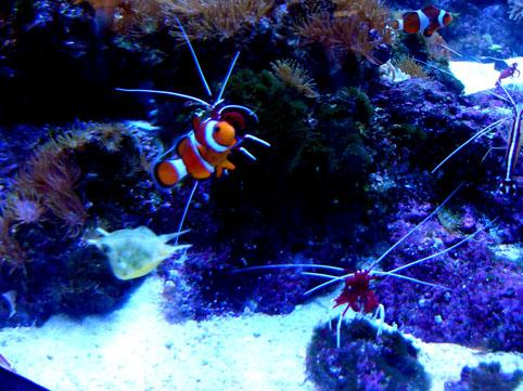 Aquarium03.jpg