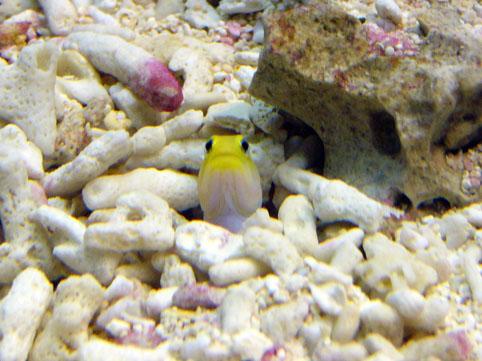 Aquarium04.jpg