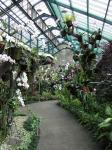 Bogor Orchid Garden 3