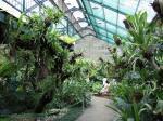 Bogor Orchid Garden 4