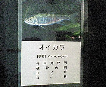 20080212