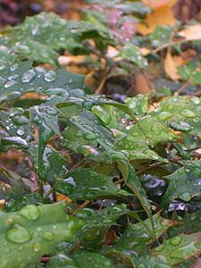 Winter-rain.jpg