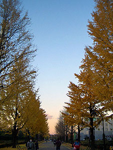icho2007-02.jpg