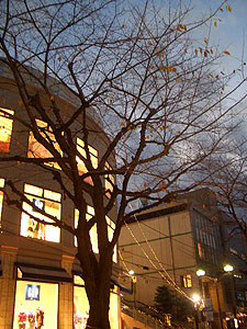 jiyugaoka-winter.jpg