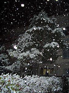 nightsnow01-0209.jpg