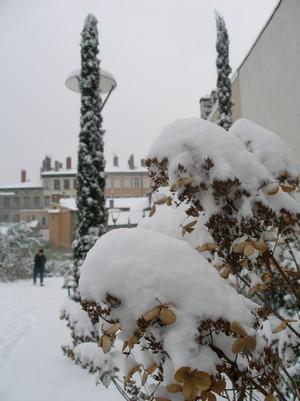 雪の日の糸杉