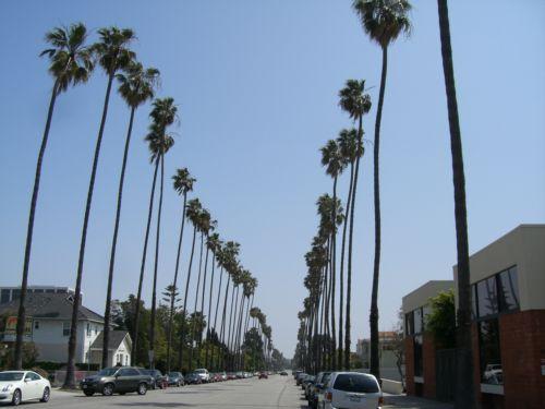 tnn_Palm street