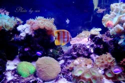 熱帯魚01