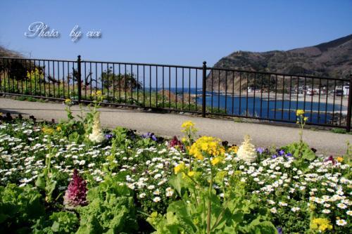 海岸のお花畑
