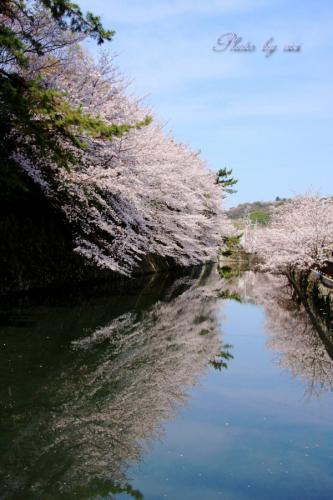 お堀の桜04