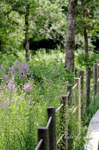 湿生花園01