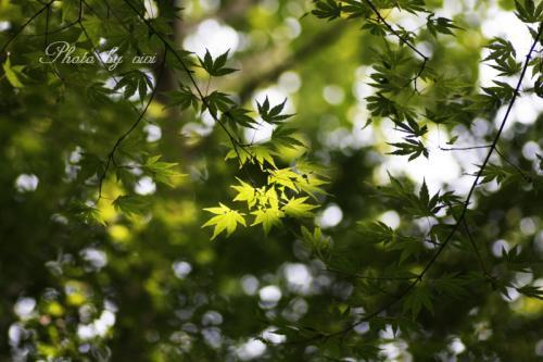 湿生花園02