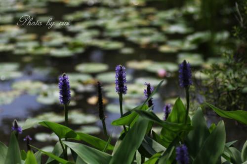 湿生花園03