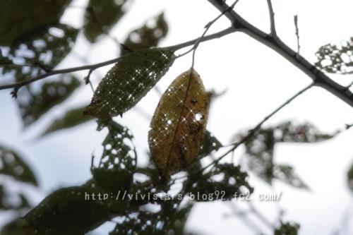 秋の日に01