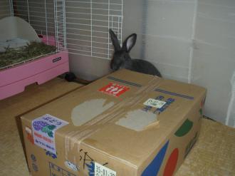 サニィさんから大きな箱