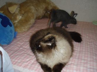 隠れんぼしよう・・猫ウサギ