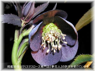yumehanabito2004-img545x409-11158171692dfp40.jpg