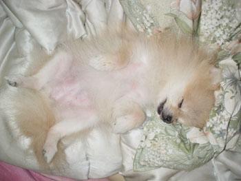 フィオ爆睡