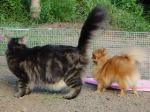 猫とちょっぴ~