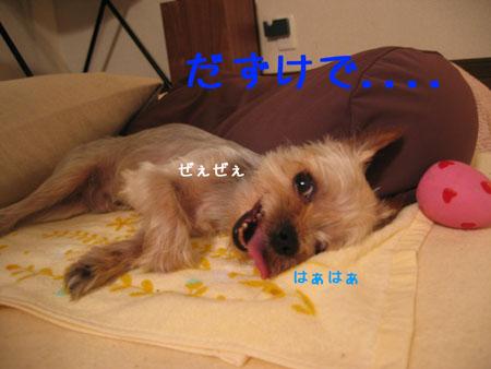 IMG_2007071102.jpg