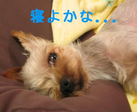 IMG_2007071103.jpg