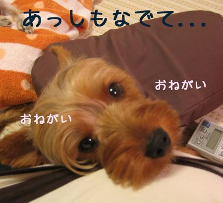 IMG_2007071104.jpg