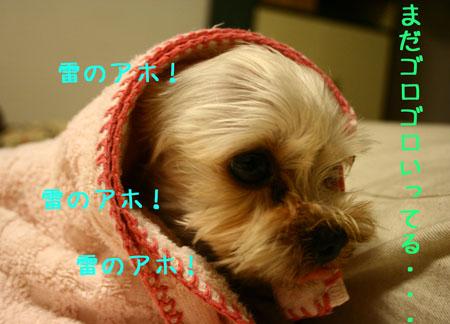 IMG_2007071204.jpg