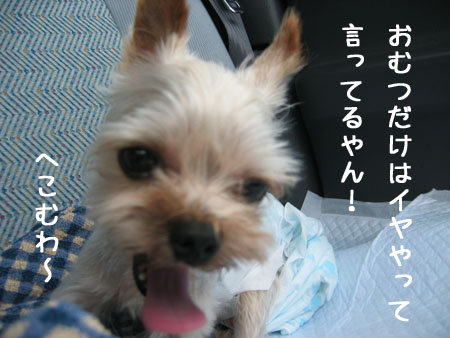 IMG_2007071301.jpg