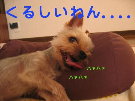 IMG_2007071303.jpg