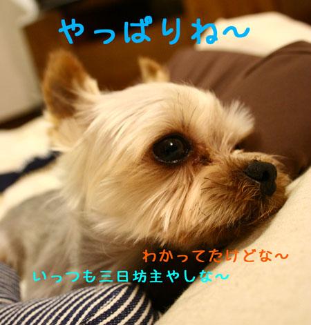 IMG_2007072305.jpg