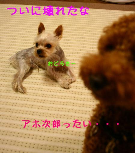 IMG_2007072504.jpg