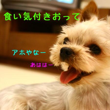 IMG_2007072512.jpg