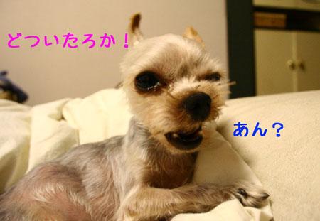 IMG_2007081902.jpg