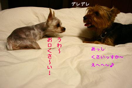 IMG_2007083102.jpg