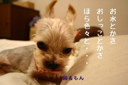 IMG_2007091103.jpg