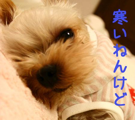 IMG_2007102303.jpg