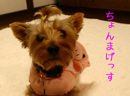 IMG_2007111303.jpg