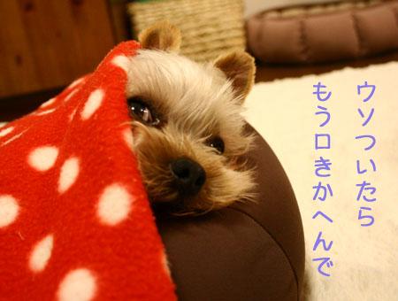 IMG_2007121203.jpg