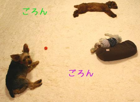 IMG_2007121604.jpg