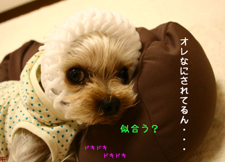 IMG_2007122304.jpg