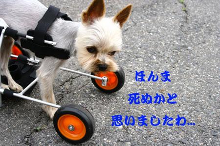 IMG_20075172.jpg