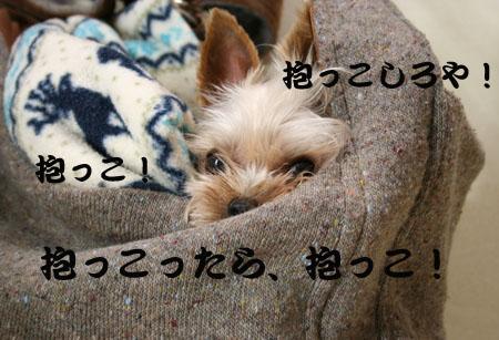 IMG_20075173.jpg
