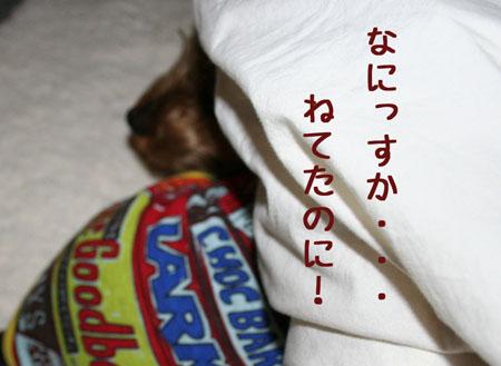 IMG_2008012205.jpg