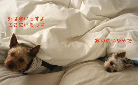 IMG_2008012901.jpg