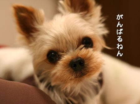 IMG_2008020701.jpg