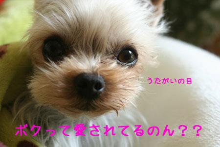 IMG_2008032903.jpg